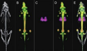 Toward richer in vivo imaging data – a sequential protocol for trimodal PET/CT/SPECT imaging